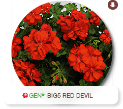 Big5 Red Devil